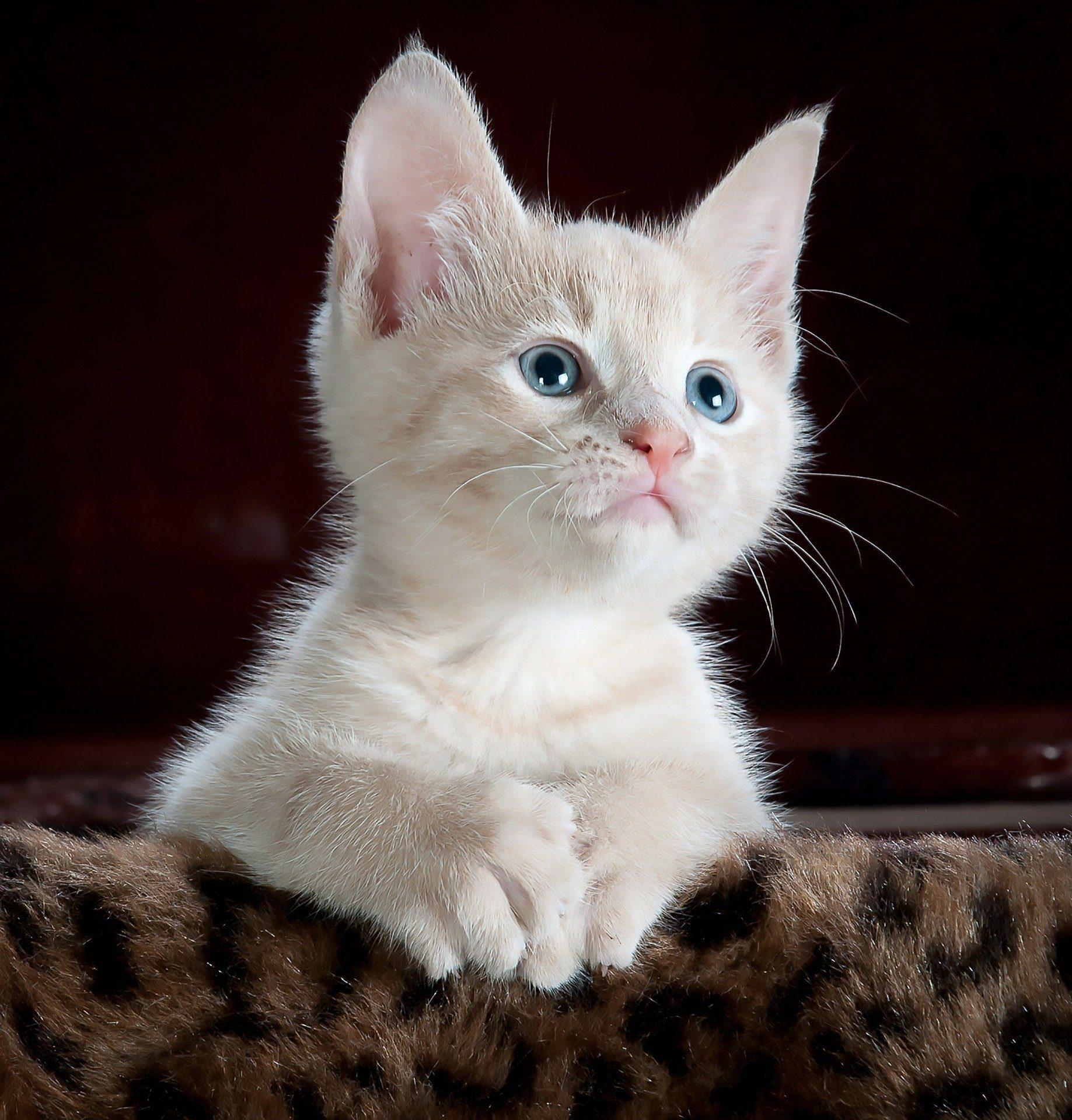 kitty-551554_1920.jpg